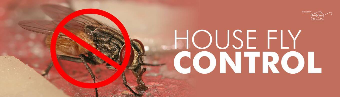 HOUSE FLY CONTROL