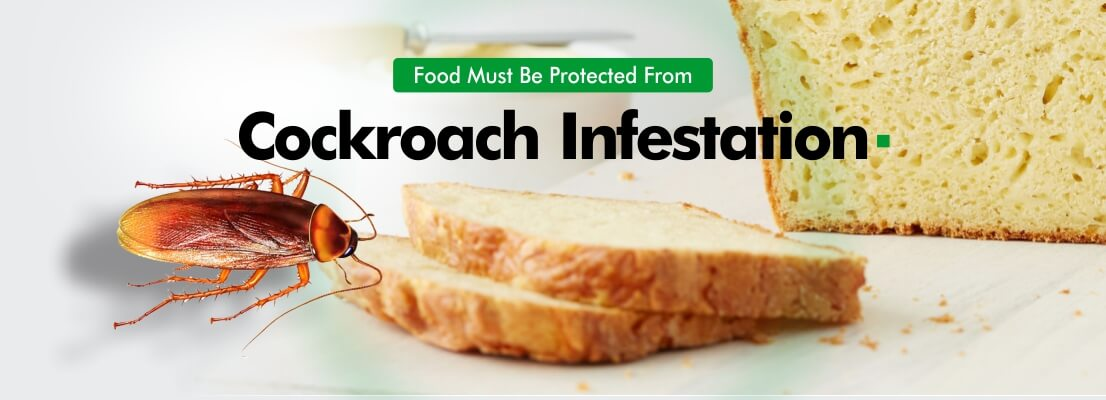 Prevent pest infestations in Food.
