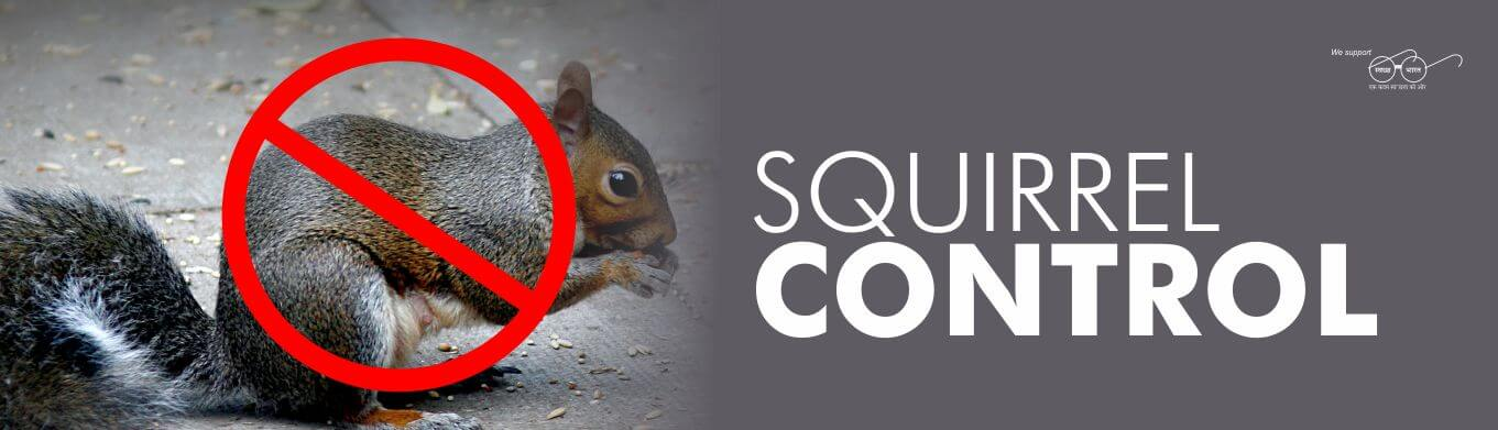 squirrel pest control services