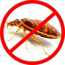 bed bug control services icon