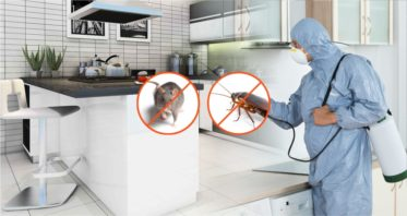 Pest Control Services Termite Bedbugs Cockroach Rodents Control Treatment