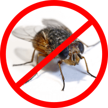 house fly control service icon