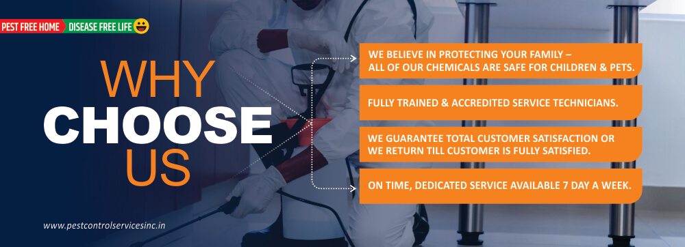 pest control service - why choose us