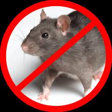 rat control service icon