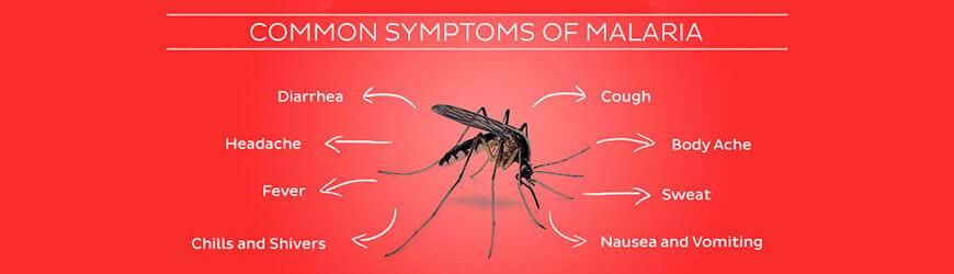 Malaria: Symptoms, treatment, and prevention