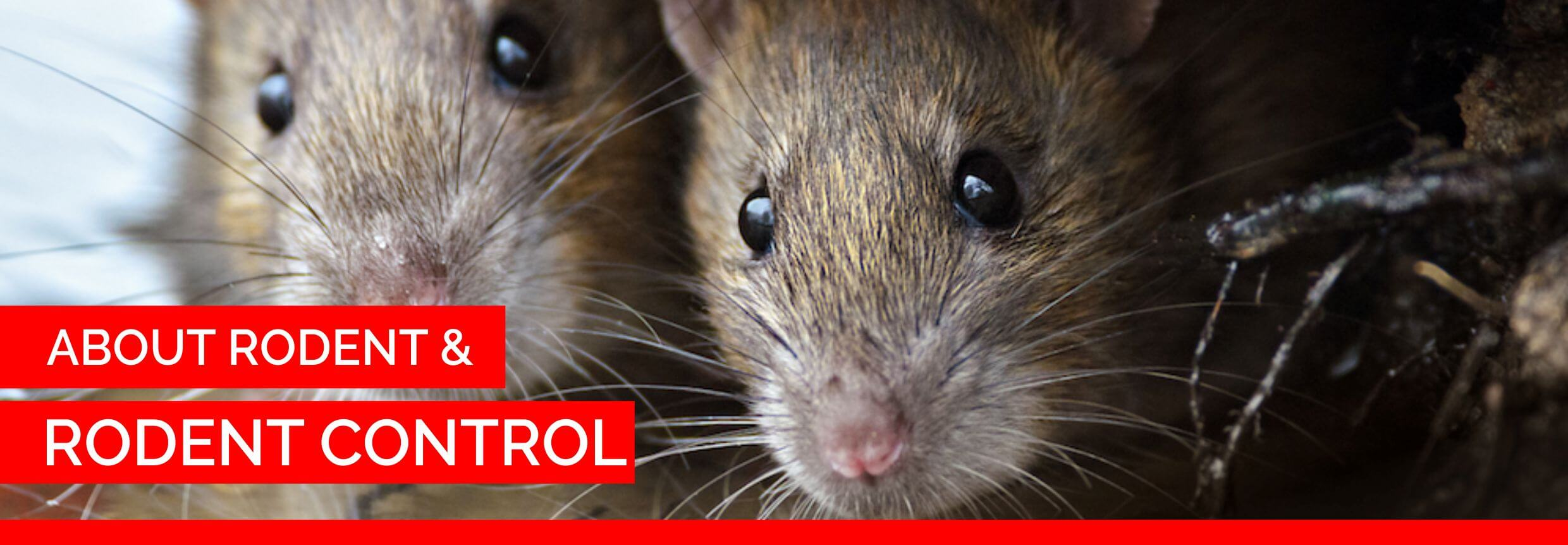 about rodent and rodent control