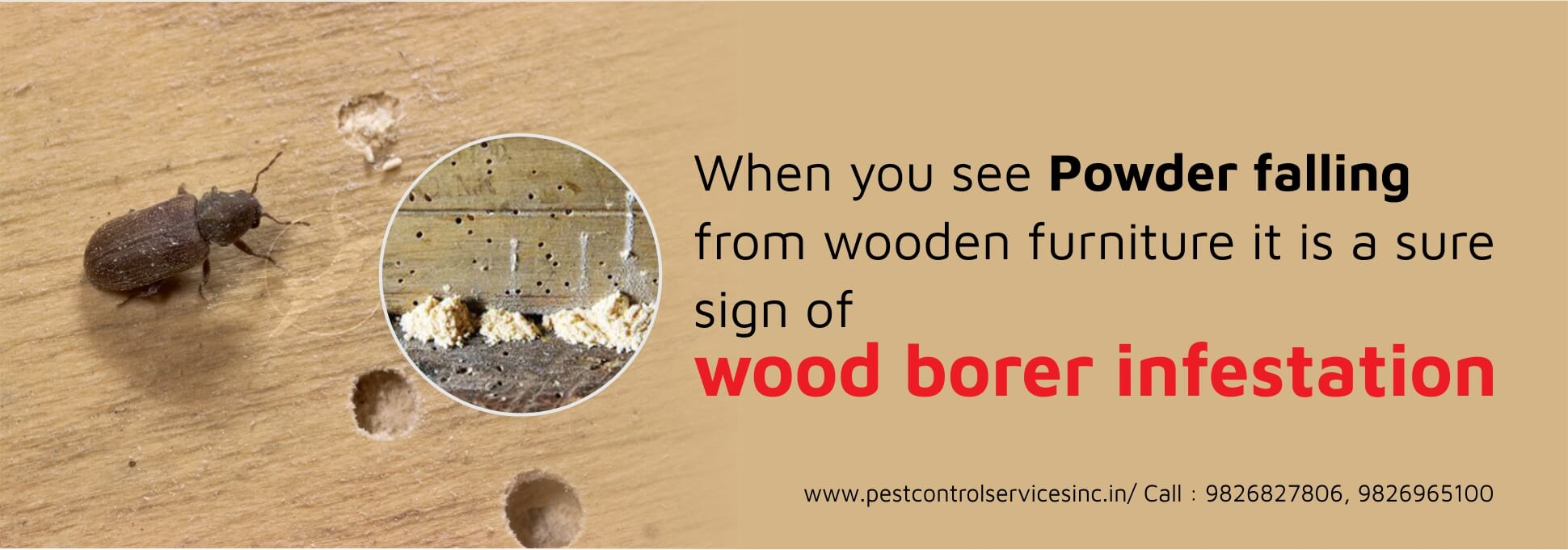 wood borer pest control service