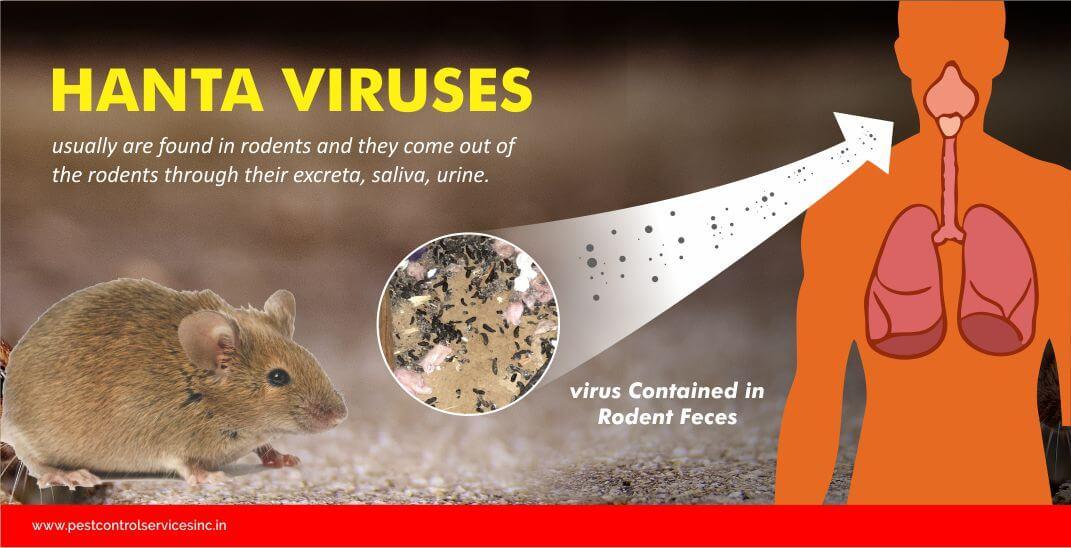 hanta virus, rodent control