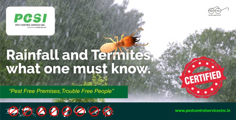 Rainfall and Termites