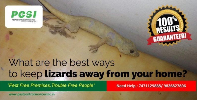 lizard control