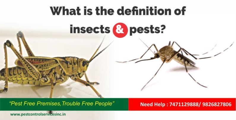 What is the definition of insects and pests?