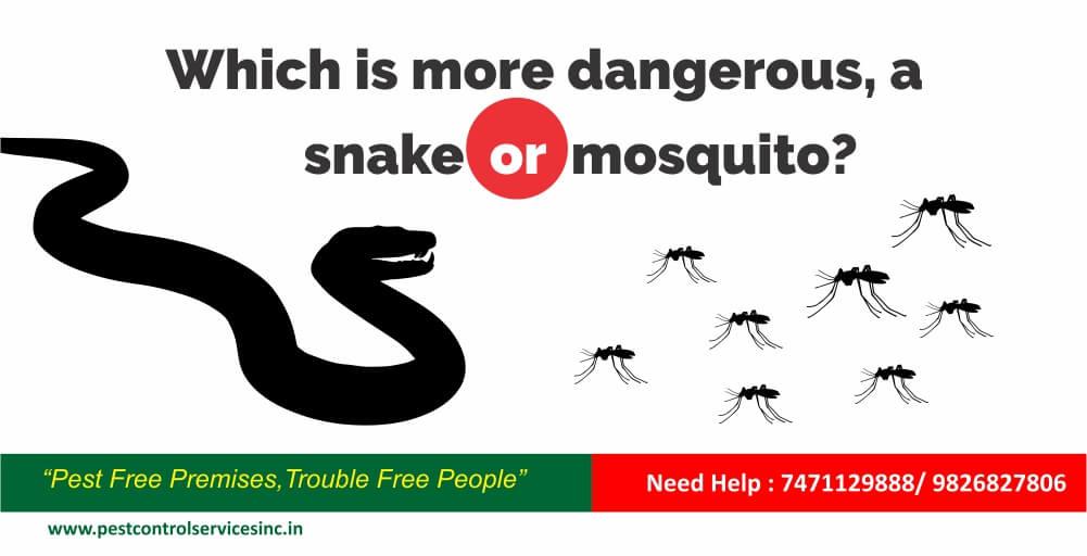 mosquito control, pest control