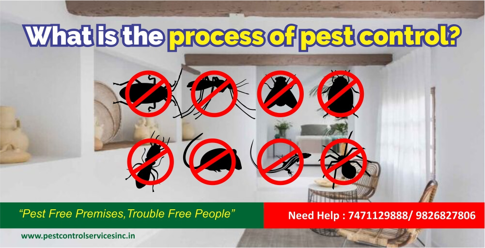 What is the process of pest control service.