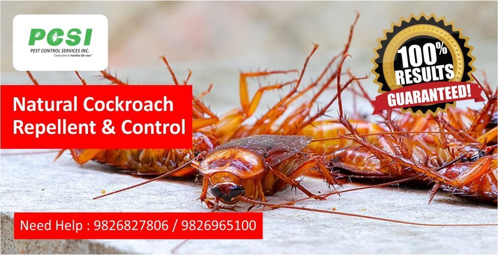 Natural Cockroach Repellent and Control