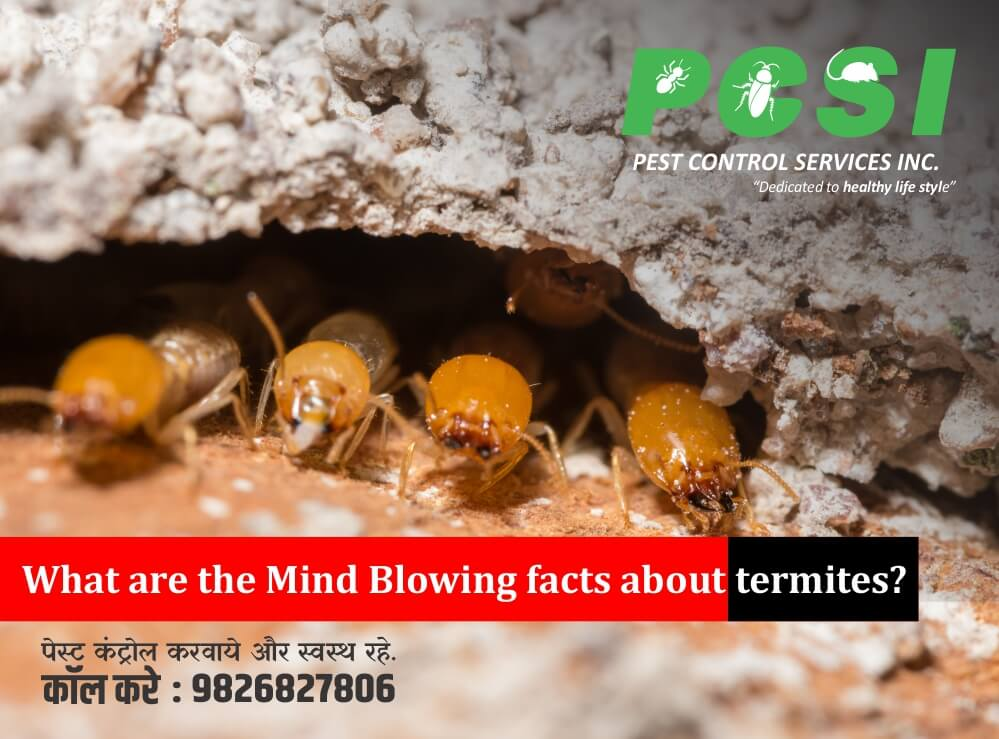facts about termites, termite control,